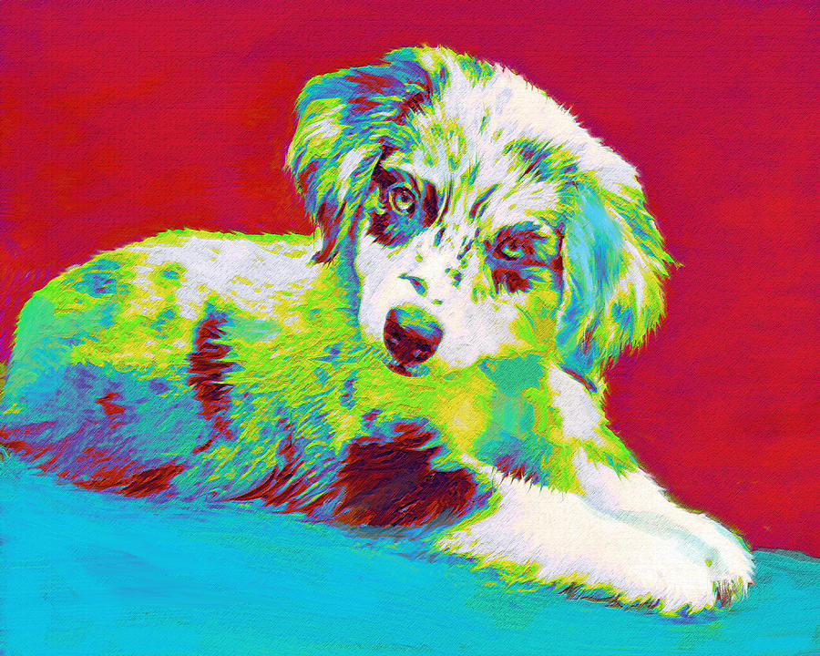Aussie Puppy Digital Art  - Aussie Puppy Fine Art Print