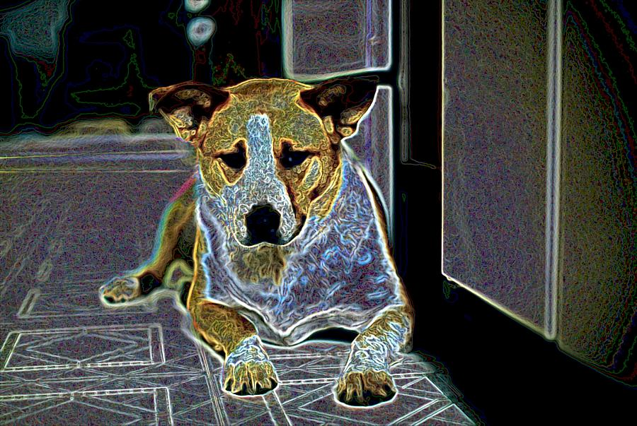 Austalian Cattle Dog Photograph - Australian Cattle Dog Boxer Mix by One Rude Dawg Orcutt
