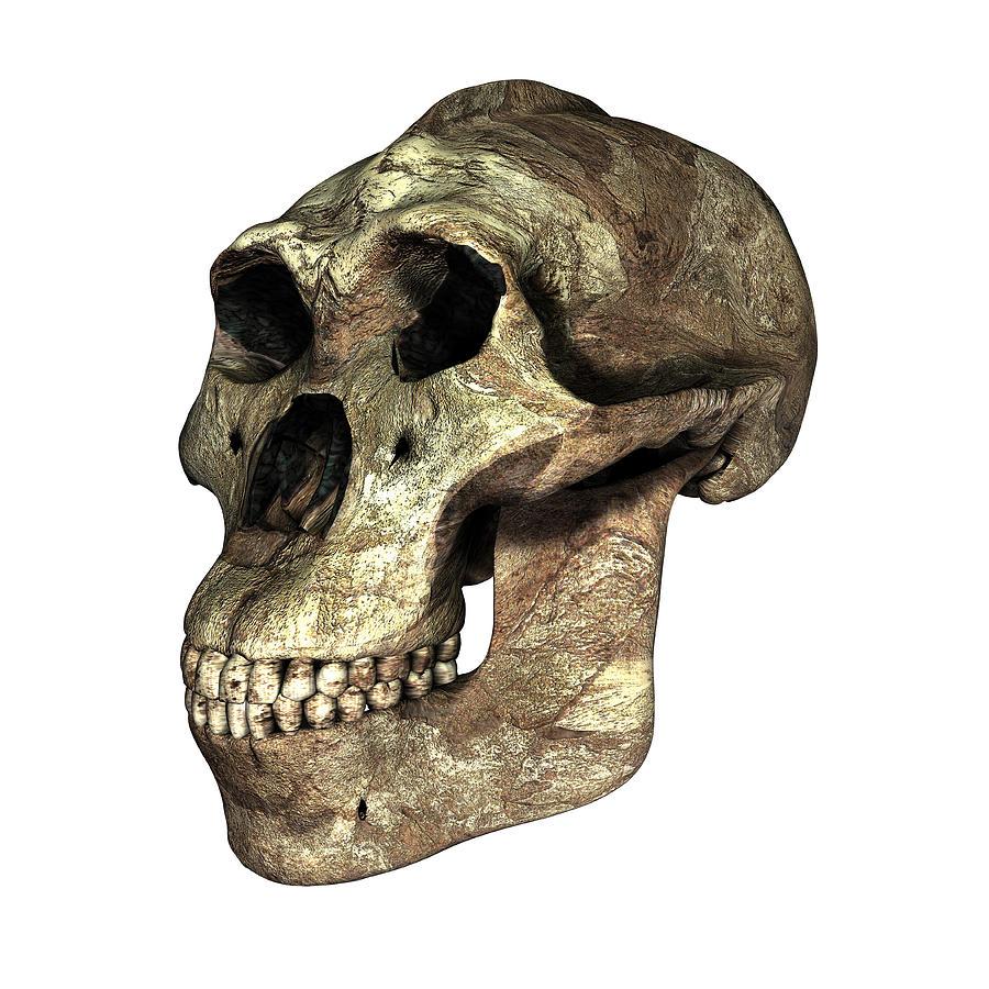Australopithecus africanus taung child dating 4