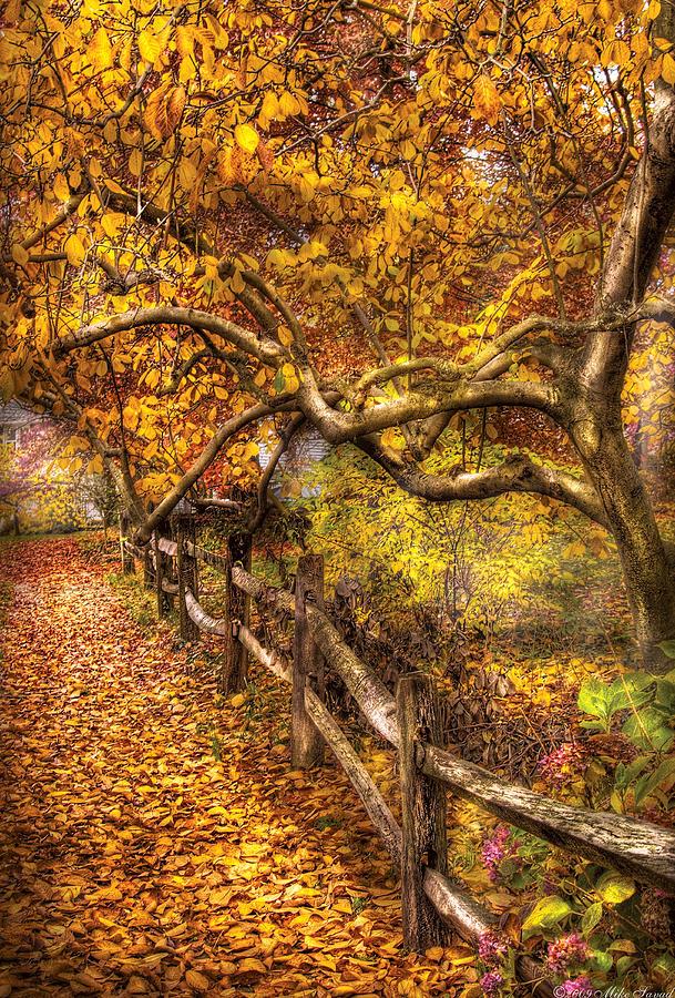 Autumn - Landscape - Country Road Side Photograph