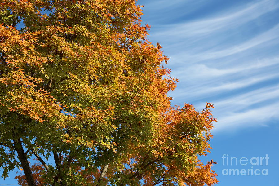 Autumn Anticipation Photograph  - Autumn Anticipation Fine Art Print