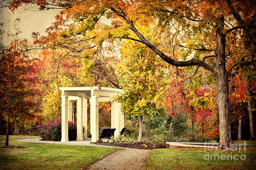 Autumn Arbor Photograph  - Autumn Arbor Fine Art Print
