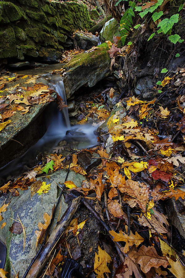 Autumn At A Mountain Stream Photograph
