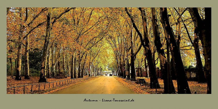 Autumn Avenue Photograph