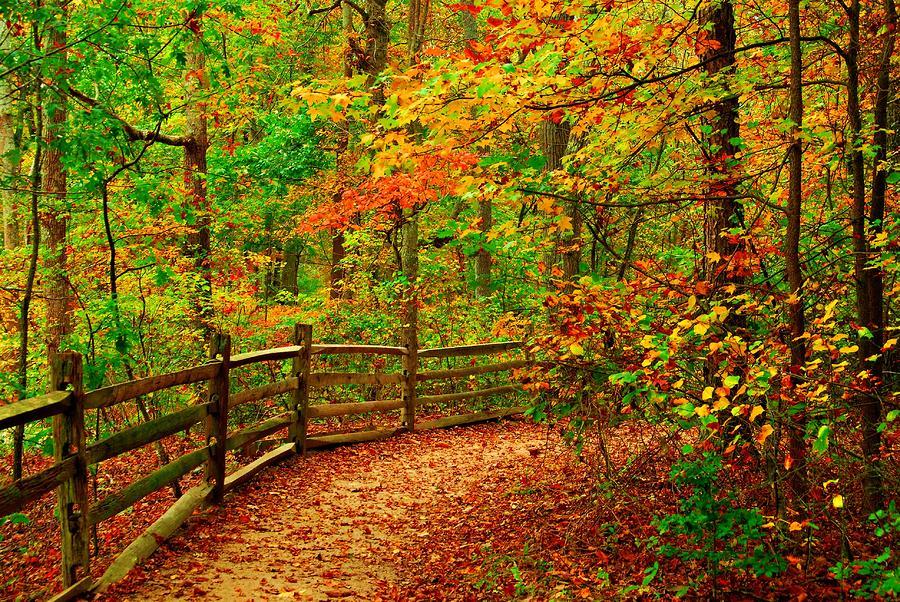 Autumn Bend - Allaire State Park Photograph