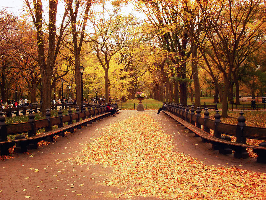Autumn - Central Park - New York City Photograph
