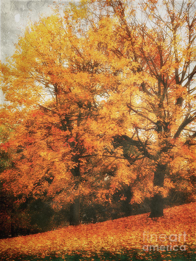 Autumn Dream Photograph  - Autumn Dream Fine Art Print