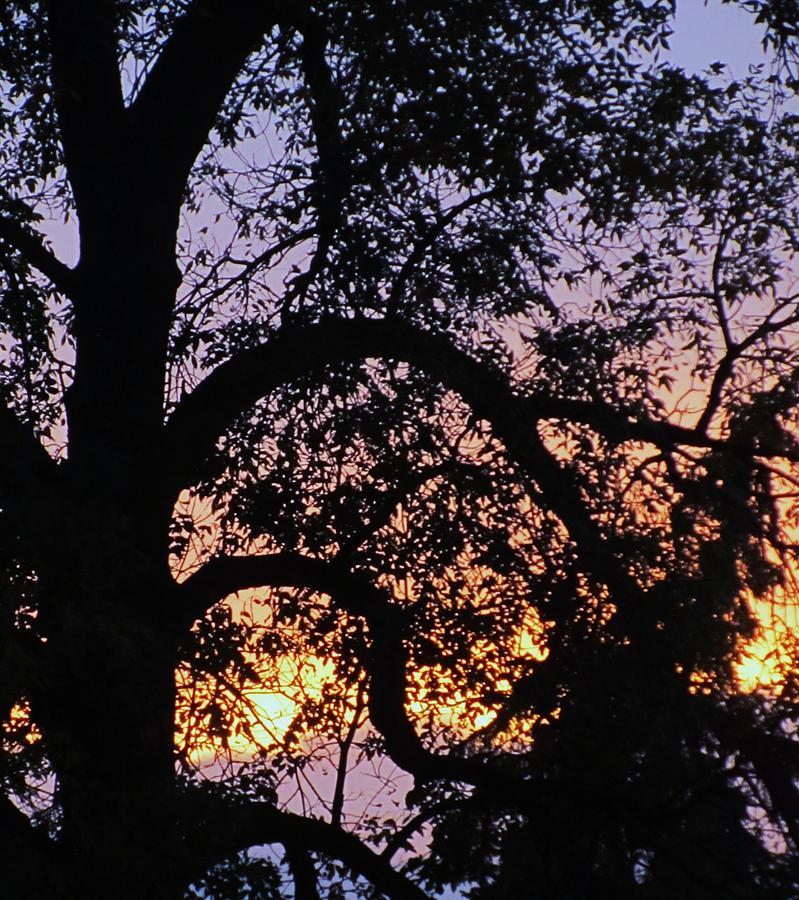 Tree Sun Dusk Photograph - Autumn Dusk by Todd Sherlock