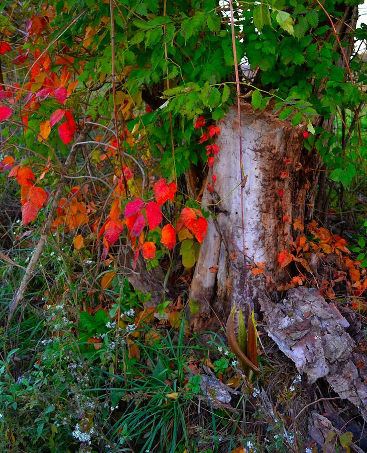 Autumn Exposed Photograph  - Autumn Exposed Fine Art Print