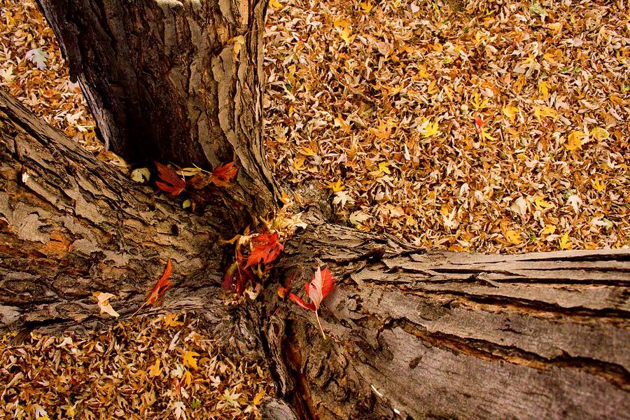 Autumn Fall Photograph