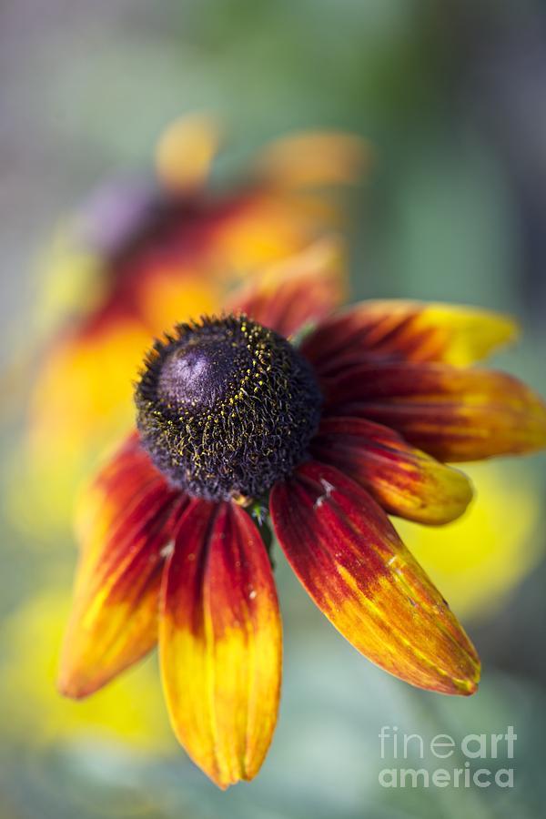 Floral Photos  Photograph - Autumn Feelings. by  Andrzej Goszcz