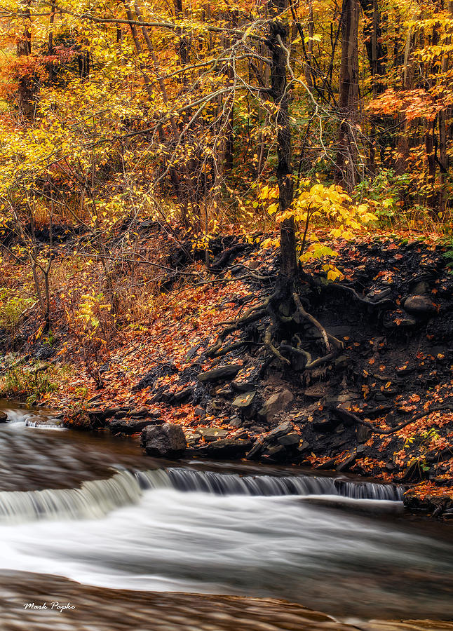 Autumn Flow Photograph