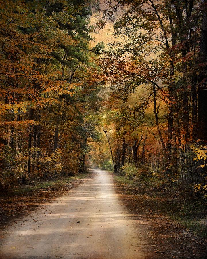 Autumn Photograph - Autumn Forest 3 by Jai Johnson