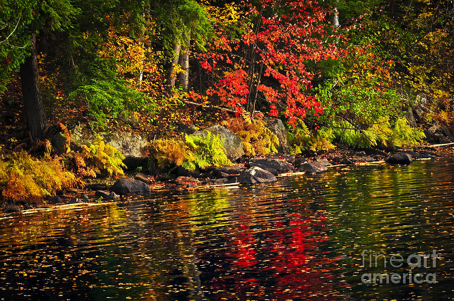 Autumn Forest And River Landscape Photograph  - Autumn Forest And River Landscape Fine Art Print