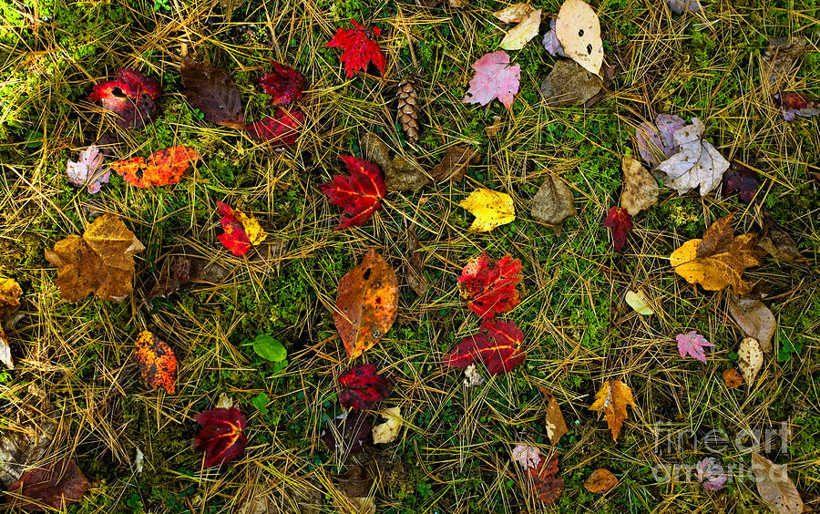 Autumn Forest Floor Photograph
