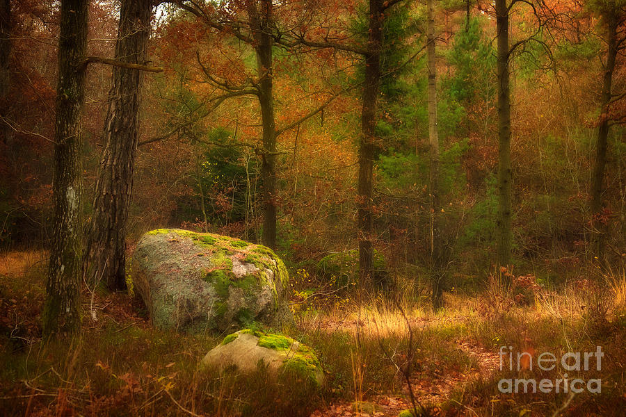 Autumn Forest Walk Photograph  - Autumn Forest Walk Fine Art Print