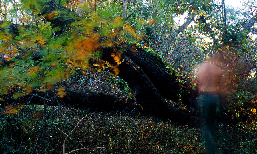 Autumn Ghost Photograph