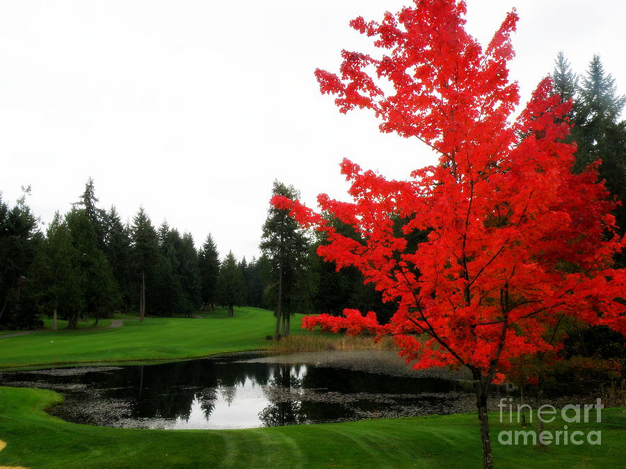 Autumn Golf Course Glass Art  - Autumn Golf Course Fine Art Print