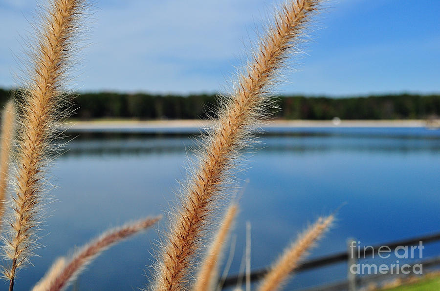 Autumn Grasses Photograph  - Autumn Grasses Fine Art Print