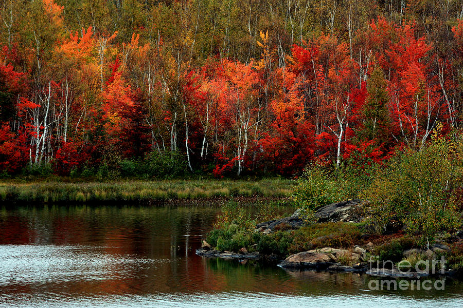 Autumn In Canada 2 Photograph
