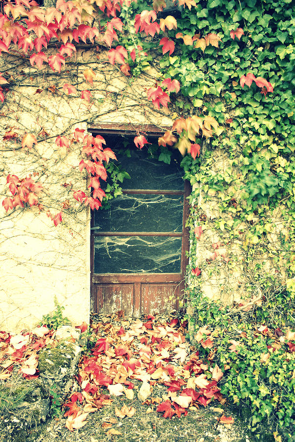 Autumn In France Photograph  - Autumn In France Fine Art Print