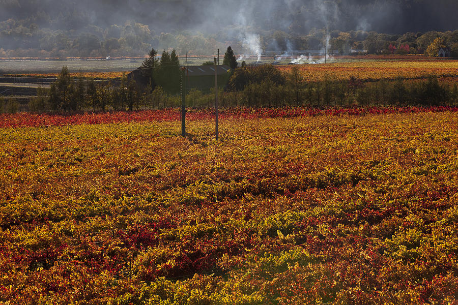 Autumn Photograph - Autumn In Napa Valley by Garry Gay