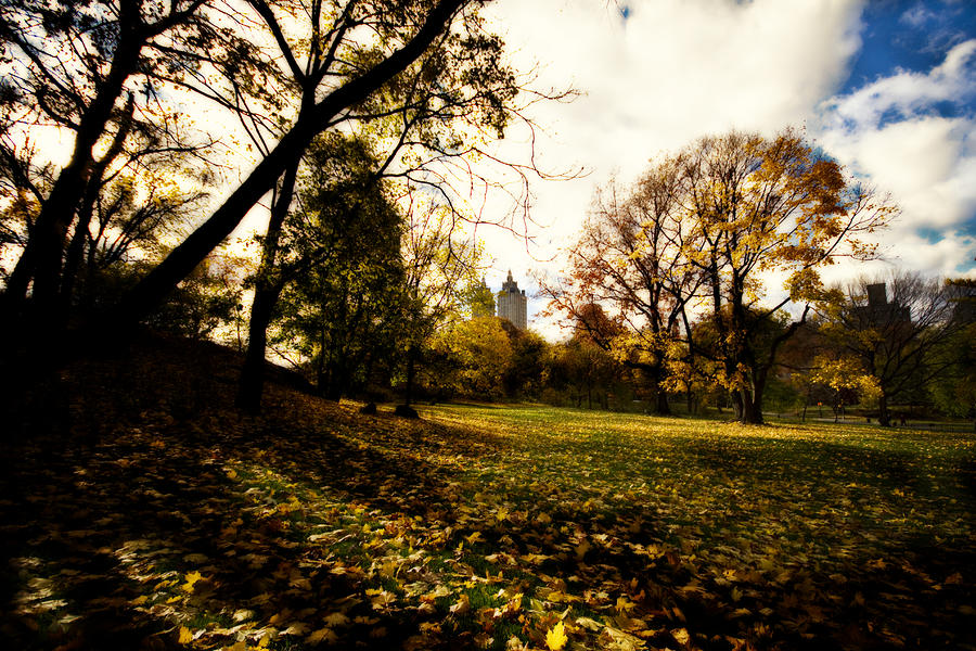Autumn In The City Photograph  - Autumn In The City Fine Art Print