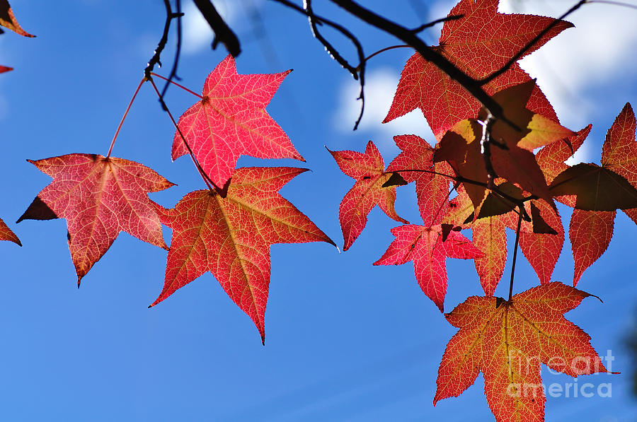 Autumn In The Sky Photograph  - Autumn In The Sky Fine Art Print