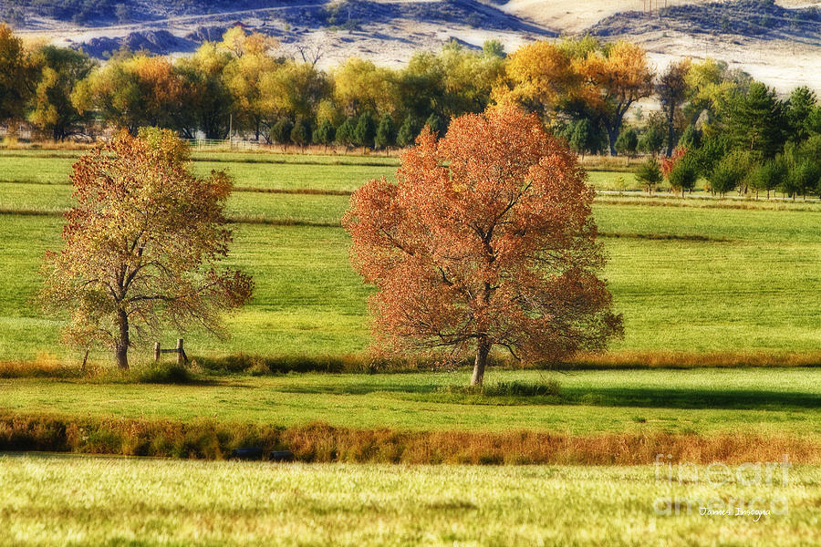 Autumn Landscape Dream Photograph