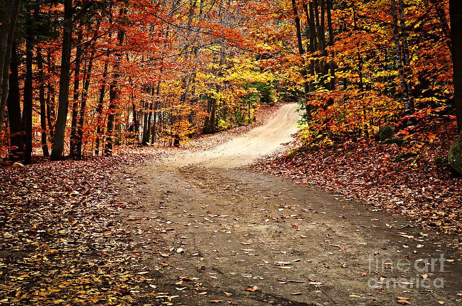 Autumn Landscape With A Path Photograph