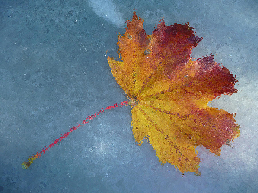 Autumn Leaf Under Glass Photograph