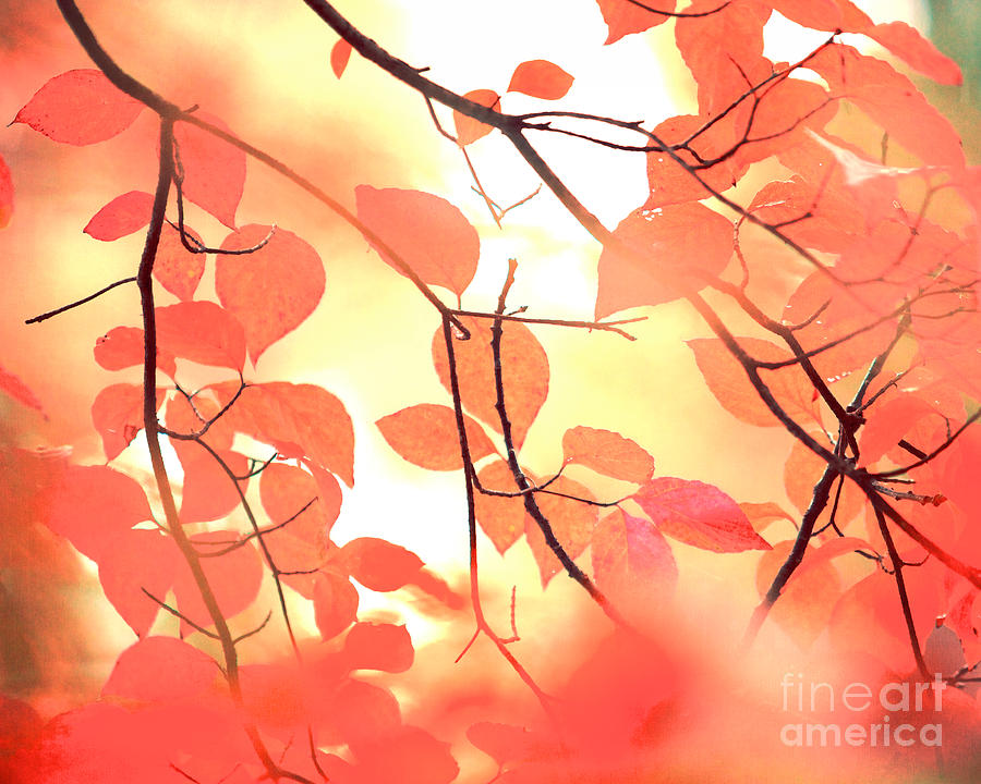 Autumn Leaves Ablaze With Color Photograph