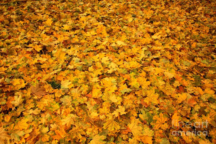 Autumn Leaves Canvas Photograph