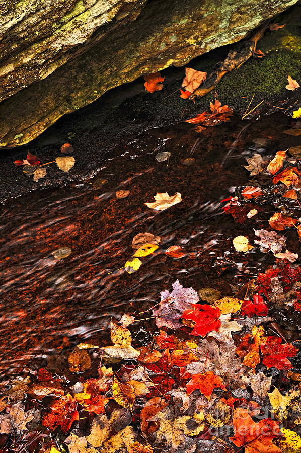 Autumn Leaves In River Photograph