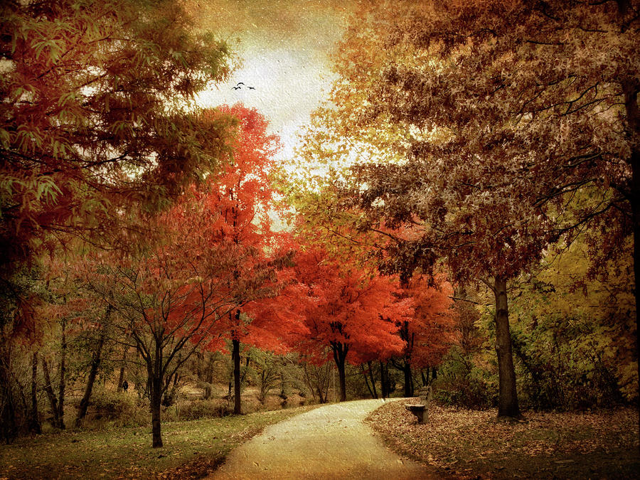 Autumn Maples Photograph
