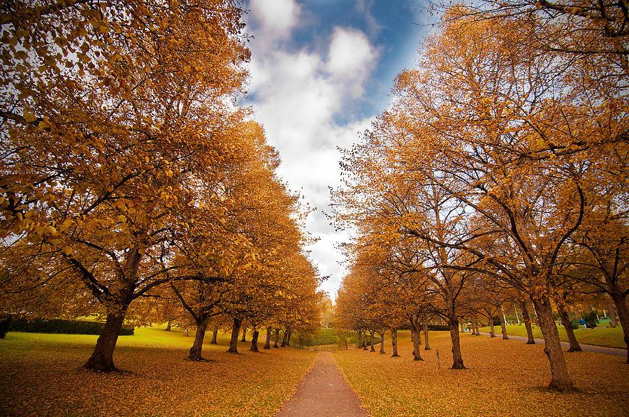 Autumn Sweden Yellow Orange Leaf Tree Path V�rmland Swedish Sky Park Cemetary Photograph - Autumn by Micael  Carlsson