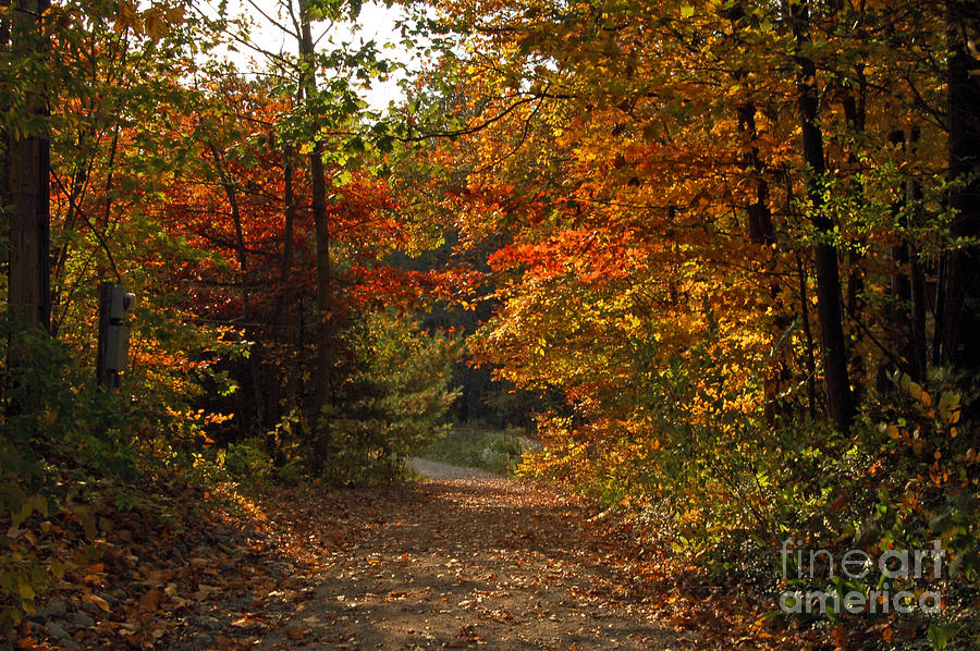 Autumn Nature Trail Photograph  - Autumn Nature Trail Fine Art Print