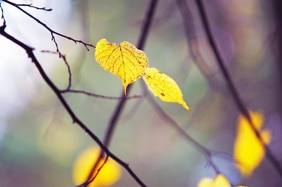 Autumn Photograph - Autumn Nostalgie by Jenny Rainbow