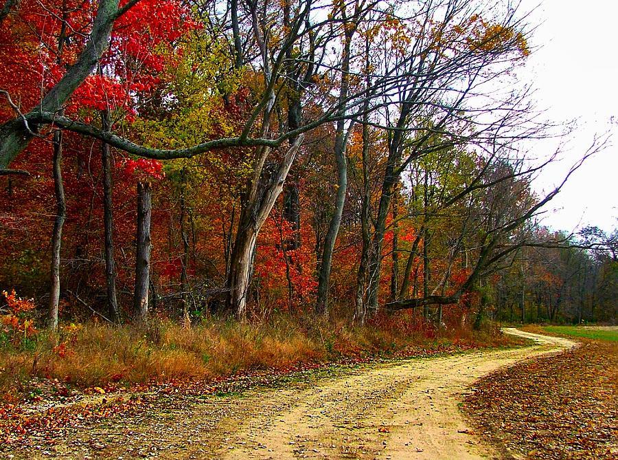 Autumn On Bottomland Road Photograph