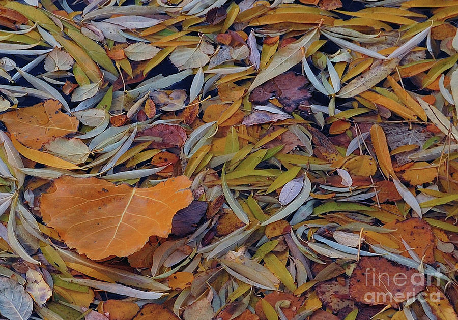 Autumn Palette Photograph  - Autumn Palette Fine Art Print