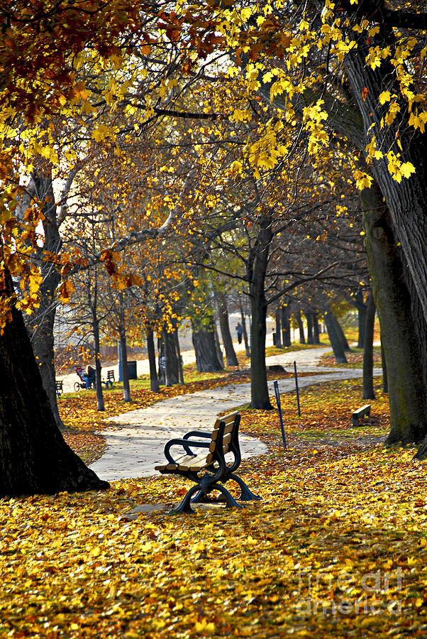 Autumn Park In Toronto Photograph  - Autumn Park In Toronto Fine Art Print