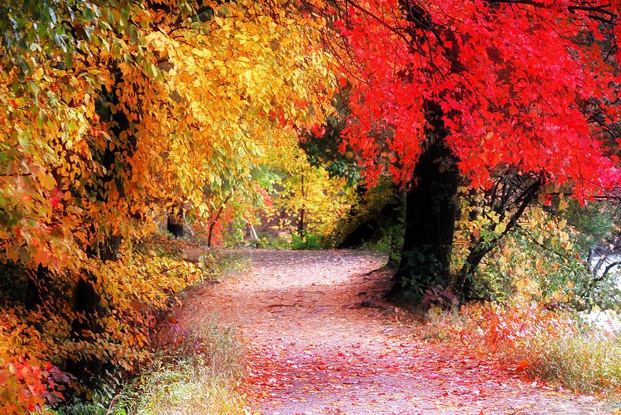 Autumn Path II Photograph