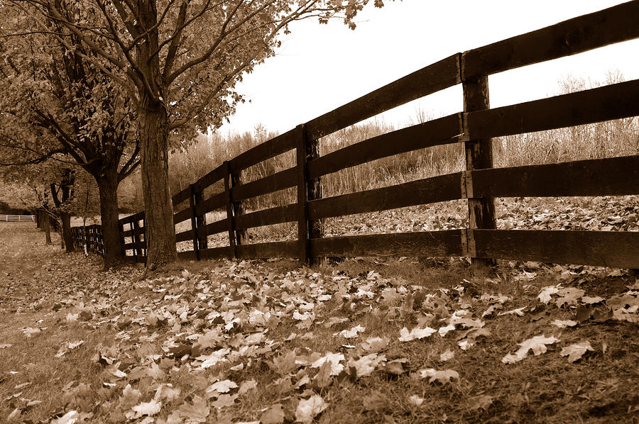 Autumn Perspective Photograph  - Autumn Perspective Fine Art Print
