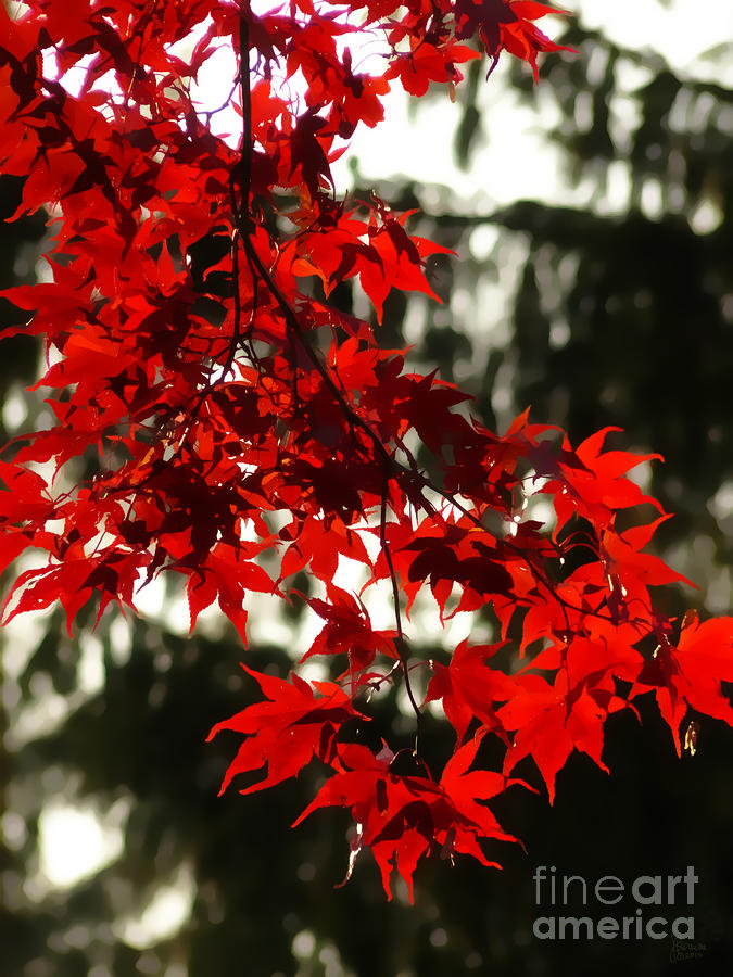 Autumn Red Photograph  - Autumn Red Fine Art Print