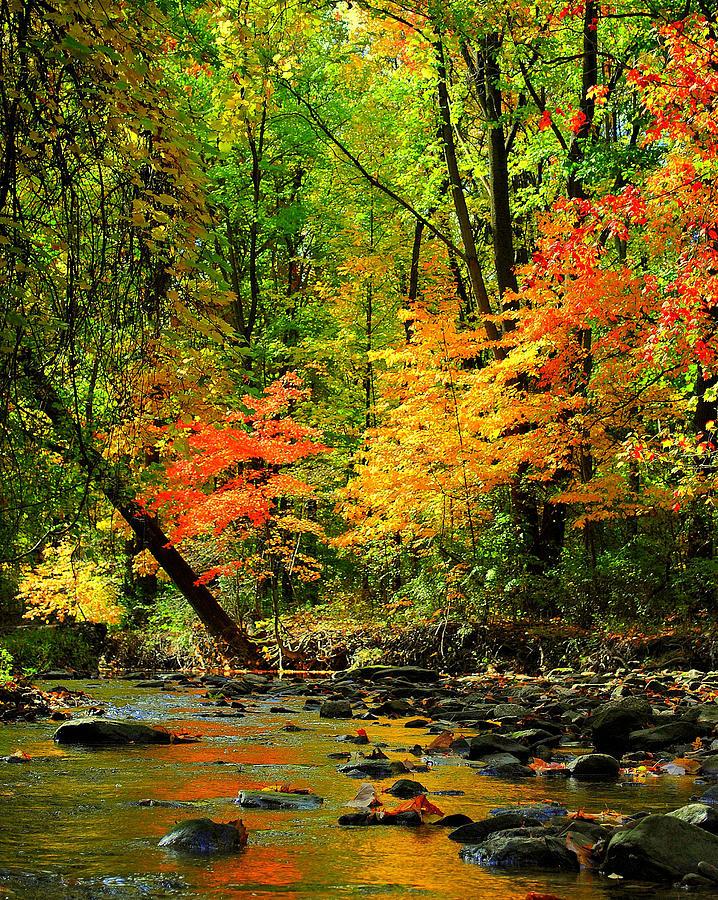 Autumn Reflects Photograph
