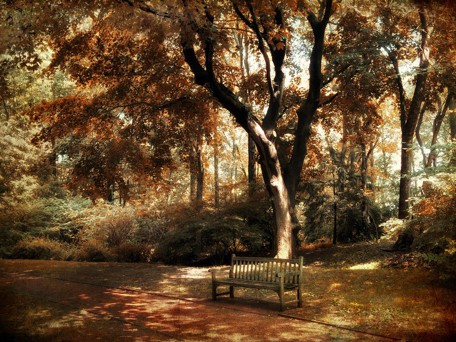 Autumn Repose Photograph  - Autumn Repose Fine Art Print