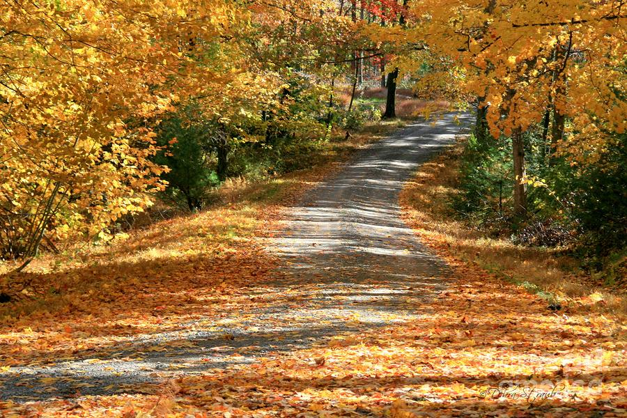 Autumn Road Photograph  - Autumn Road Fine Art Print