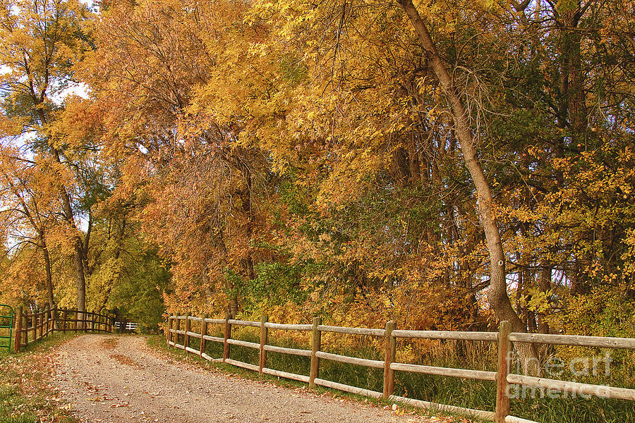 Autumn  Road To The Ranch Photograph