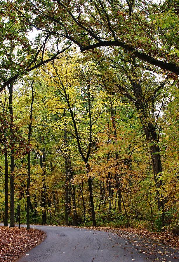 Woodland Photograph - Autumn Sensation by Bruce Bley