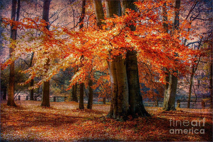 autumn skirt III Photograph  - autumn skirt III Fine Art Print